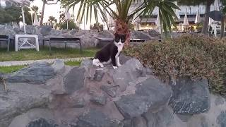 Коты и кошки Кипр Лимассол 2017