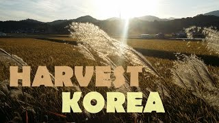 HARVEST IN KOREA