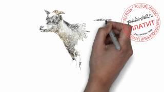 Нарисованные карандашом животные  Как нарисовать поэтапно карандашом козу