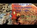 Tips Loloh Anakkan Murai Batu  Hari Anakan Murai Batu Hutan Yang Di Buang  Mp3 - Mp4 Download