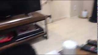 Funny Cat Meowing Really Weird - Talking Cat