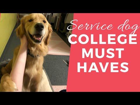 Top 10 Service Dog in College Essentials