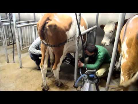 Návštěva BIO farmy MP Rampuše / Visit of organic milk farm MP Rampuše