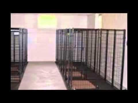 Indoor Kennels Youtube