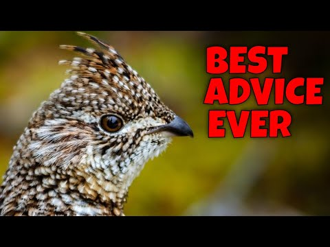 Best Ruffed Grouse Hunting Advice I Ever Got: THE PEEP