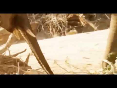 Animals Documentary: What's