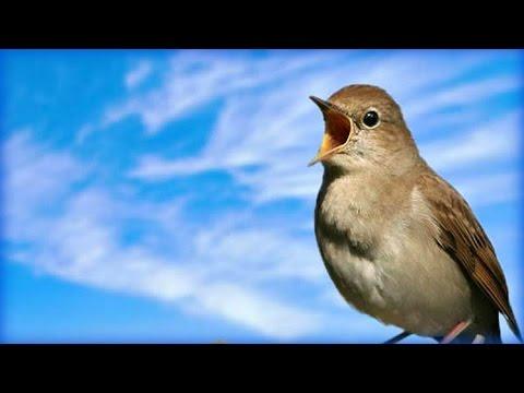 Занятие по экологии Здравствуйте, птицы! ⋆ Планета Детства