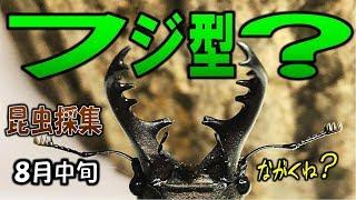 カブトムシ+クワガタ=昆虫採集 ミヤマクワガタの大アゴの形状について...