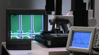 自动聚焦 显微镜(中文) 中央精机(株)
