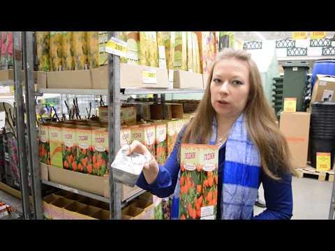 Леруа Мерлен растения: качество, цены, ассортимент
