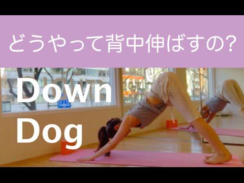down dogで背中を伸ばす方法  day 8の前に   youtube