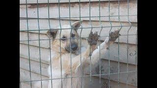 Содержание безнадзорных животных