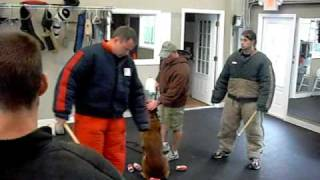John Grasta And Carlo At Tampa Working Dog Club2