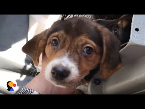 Puppy Plane Flies Rescue Dogs to Safety | The Dodo