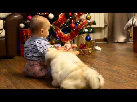 Shih-tzu is best family dog! Enjoy!