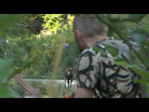 ROOSEVELT ELK HUNTING IN OREGON WITH A RECURVE BOW