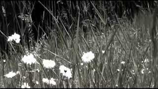 Pitiful - StriLit (Violin/Cello Cover) - Matt Costa/Taylor Swift