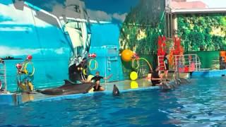 Дельфины поразили людей своим пением и заслужили звание лучших исполнителей песен 2015.