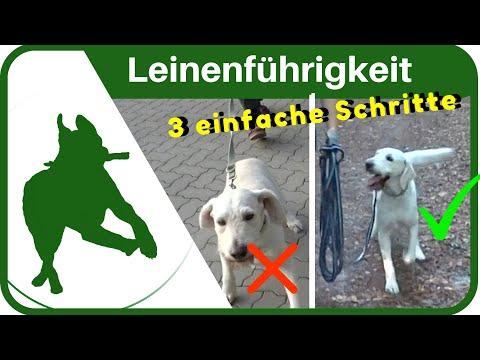 Hundeerziehung: dem Hund in 3 Schritten das Leine ziehen abgewöhnen - Leinenführigkeit ganz einfach