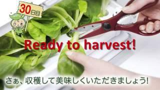 GREEN FARM - indoor hydroponic gardening solution