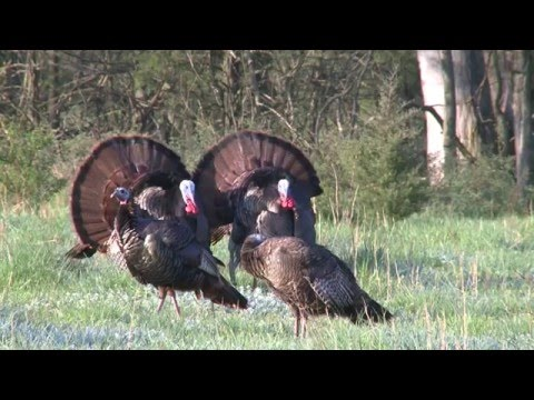 Hunting the Ghost Gobblers