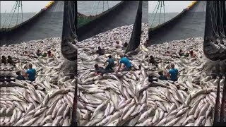 Nelayan menangkap ikan hasilnya sangat banyak bisa kaya mendadak
