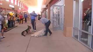Dog Training : Small Group Classes - Outlet Shoppes Of El Paso