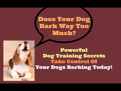 Stop A Dog From Barking All The Time Stop Annoying