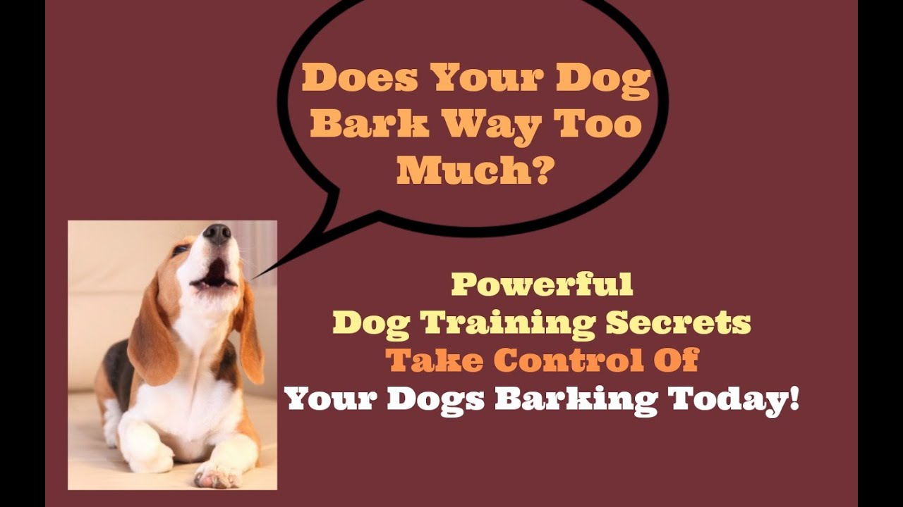 How to stop a dog barking stop dog barking before you go crazy how to stop a dog barking stop dog barking before you go crazy eventshaper