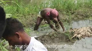 দেখুন আখ ক্ষেত এ কীভাবে মাছ ধরা হয় || fish catch in Sugarcane field #fish catching videos #fish