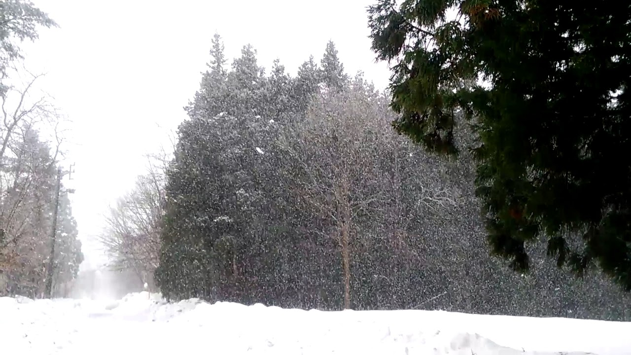 防雪林の合間から、雪が吹いてき...