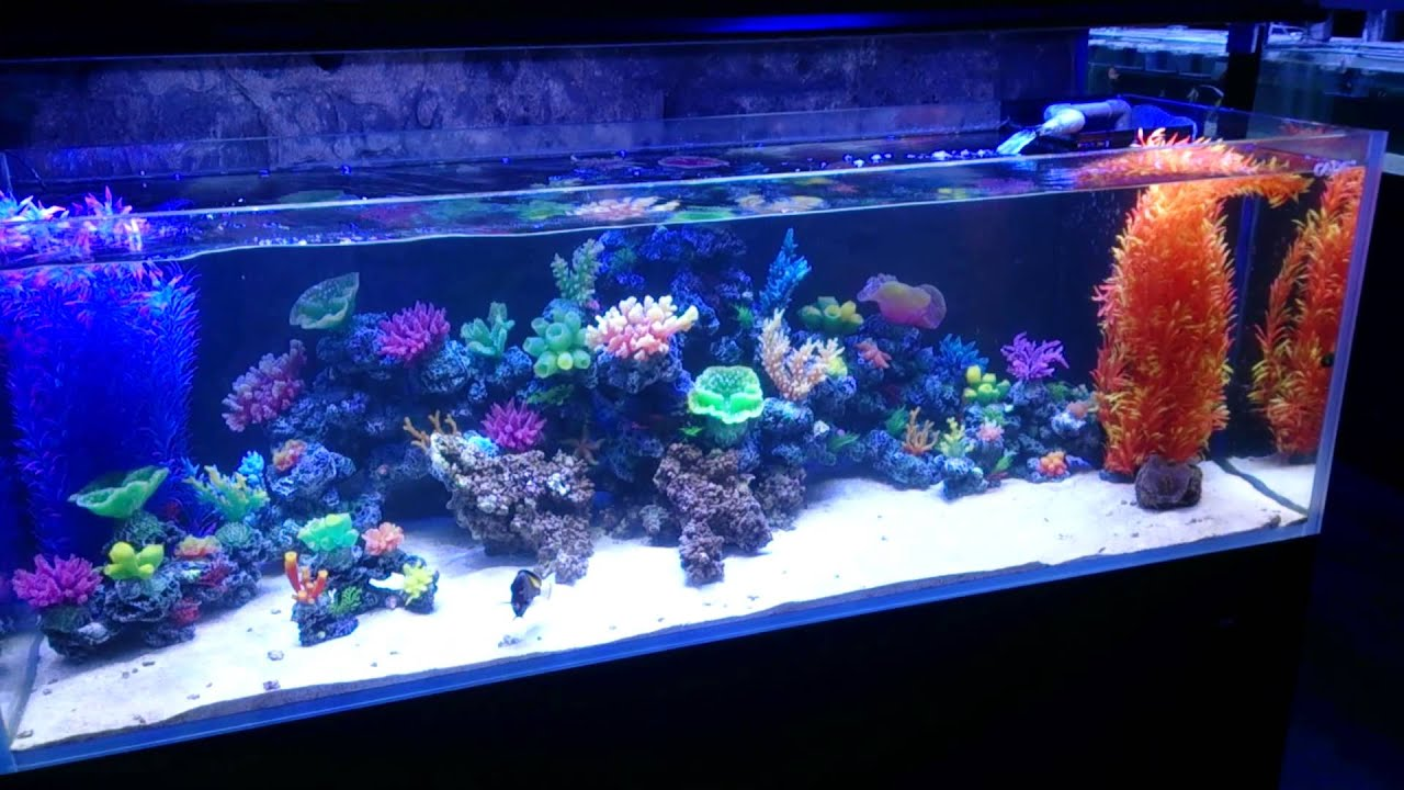 What do you think of our new range of fake coral youtube for Artificial coral reef aquarium decoration inserts