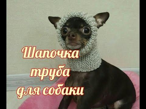 Как связать спицами шапку для собаки