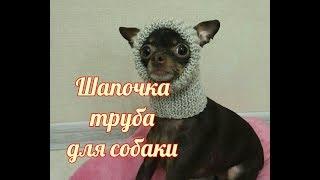 Шапочка труба для собаки, Dog hat DIY