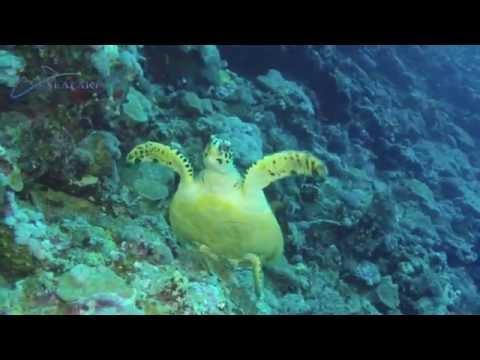 Marine Park SEAFARI ODYSSEY 2014NM
