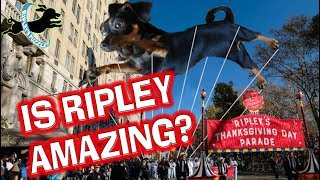 Is Ripley Amazing? Our Facebook and The Dodo Contest Compilation Video