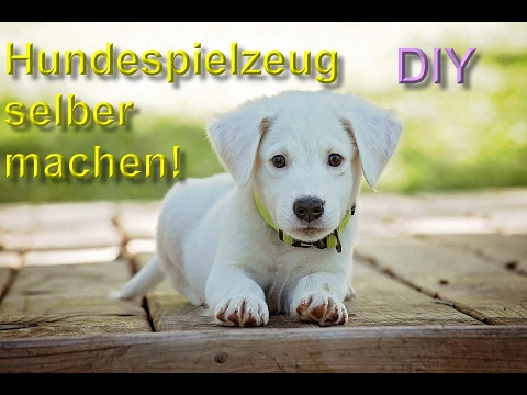 diy hundespielzeug selber machen bauen spielzeuge f r den hund basteln anleitung youtube. Black Bedroom Furniture Sets. Home Design Ideas