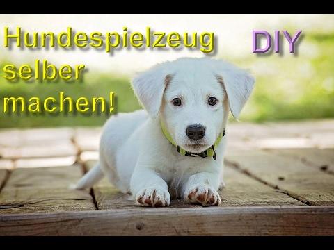 DIY Hundespielzeug selber machen / bauen – Spielzeuge für den Hund basteln – Anleitung