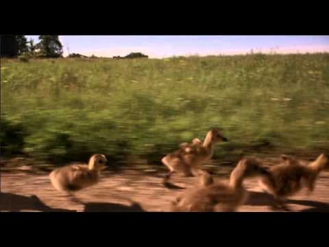 Fly Away Home (1996) - Goose