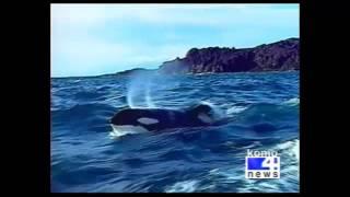 KOMO 4 News (ABC Seattle)