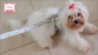 Como fazer uma linda Coleira Peitoral de Luxo Para Cães por Arte de Paninho
