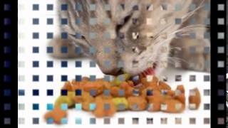 хорошие корма для кошек(, 2014-10-07T16:46:58.000Z)