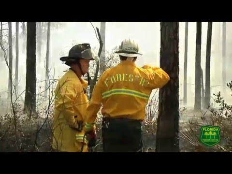 Florida Forest Service: Who We Are (Short)