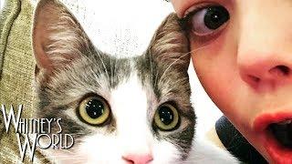 I Got a Cat! | Whitney Bjerken