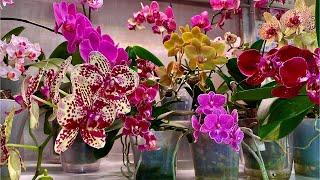 ЭТИ ГОРШКИ УБИИ ЦЫ ОРХИДЕИ корни орхидеи в них задыхаются