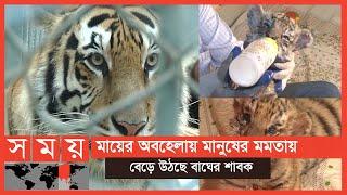 বাঘ শাবকের নাম জো বাইডেন! | Tiger Cubs | Somoy TV