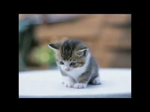 Petit Chat Trop Mignon / Cute Little Cats