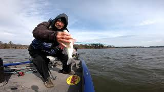 White Perch Saturday Fishing Lake Murray