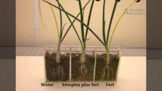 Az árpatermesztés kórtani hátteréről – Agrárágazat, Hol található a helminthosporium sativum