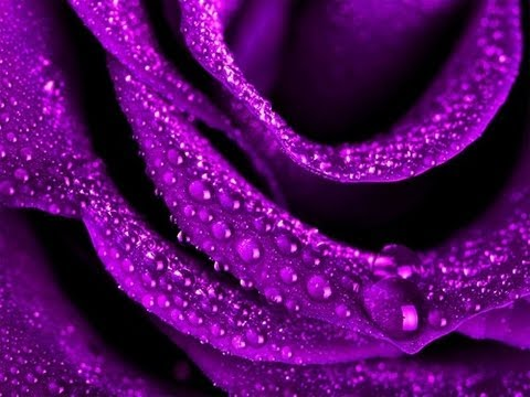 Purple Flowers and Gardens Romantic Music - YouTube